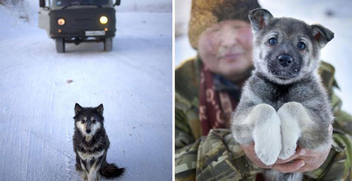 papodebuteco-coldest-village-oymyakon-russia-amos-chaple-02