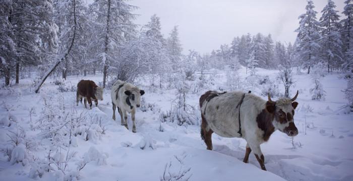 papodebuteco-coldest-village-oymyakon-russia-amos-chaple-16