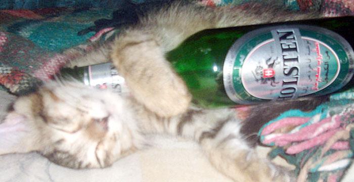 papodebuteco-cerveja-insonia