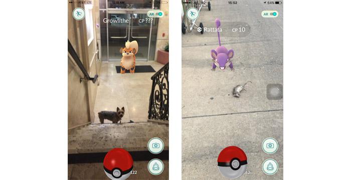pokemon-go-x-cachorro-rato